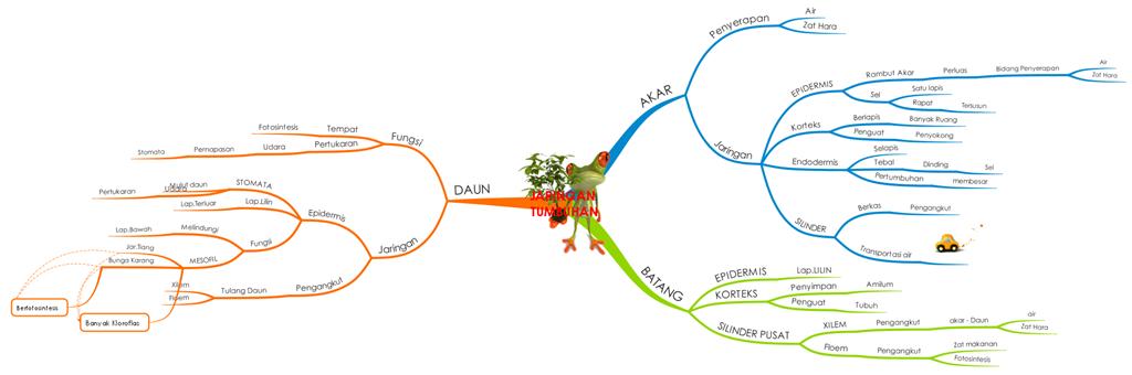Fungsi jaringan tumbuhanmateri unsd 2013 mrwahids blog organ utama tumbuhan yaitu akar batang daun bunga buah dan biji setiap organ tersebut terdiri atas jaringan jaringan yang memiliki ciri khusus dan ccuart Choice Image